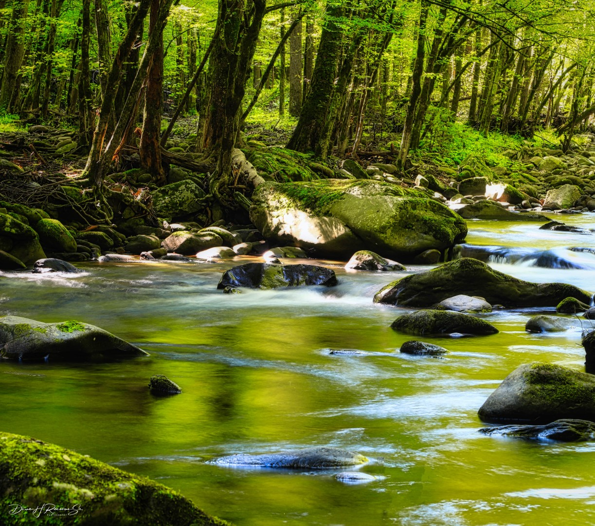 Sun on the rocks, everything is green, water flowing.  Middle Prong Little River, Tremont