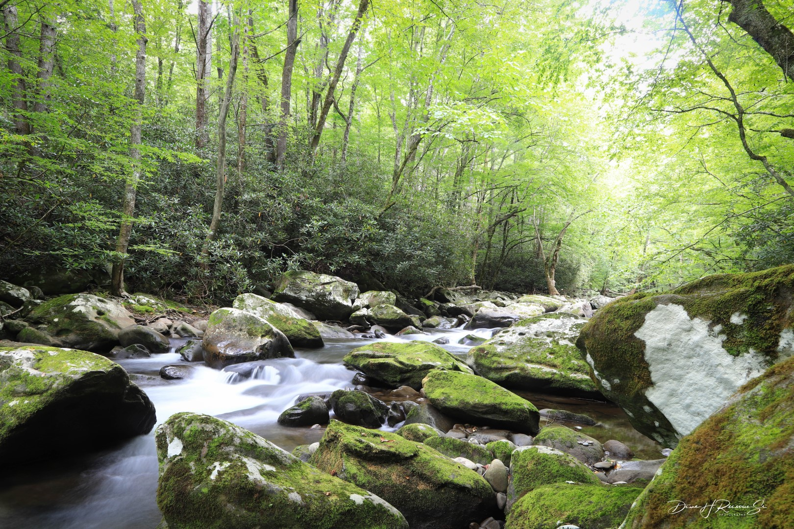 Everywhere is Green in the Smokies.  Middle Prong of Little River, near Tremont