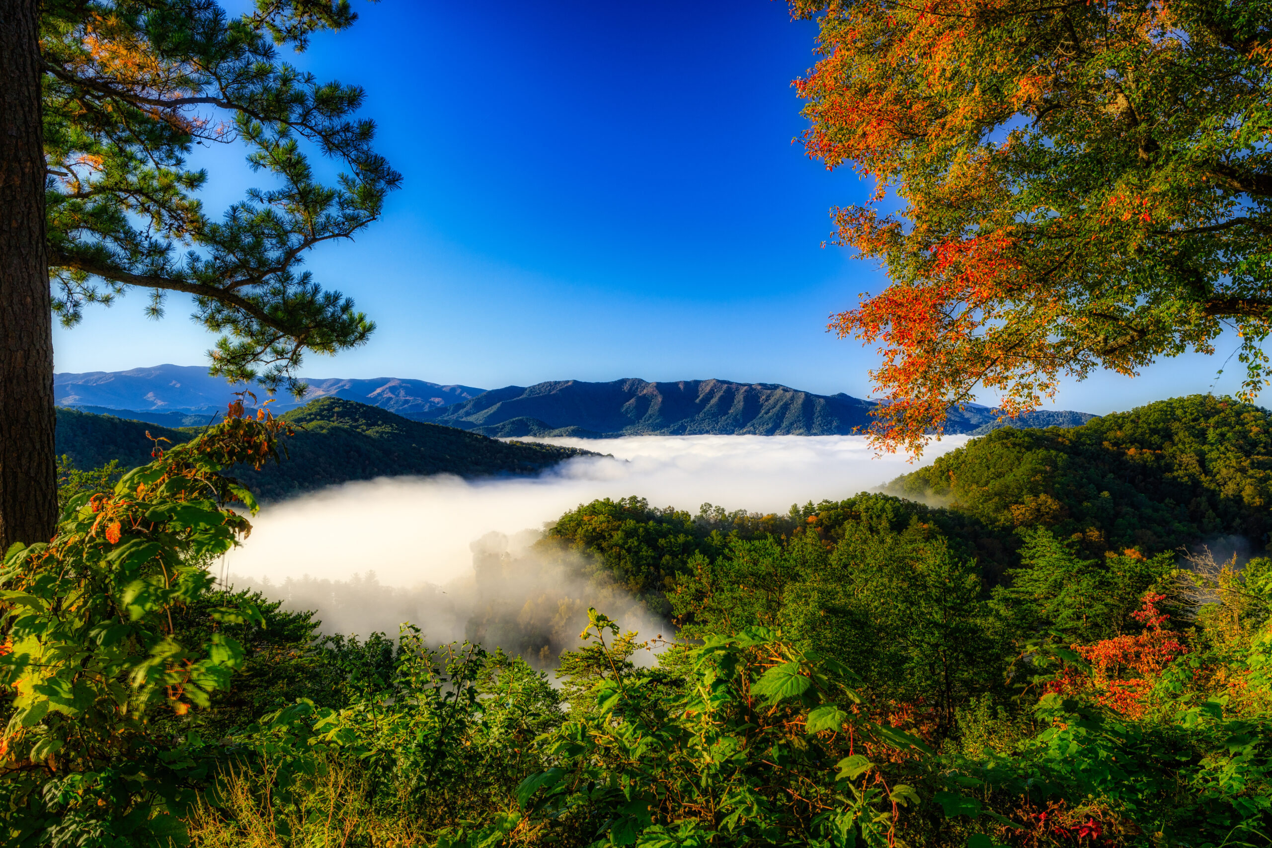 Looking over a foggy Wears Valley with fall color on display.